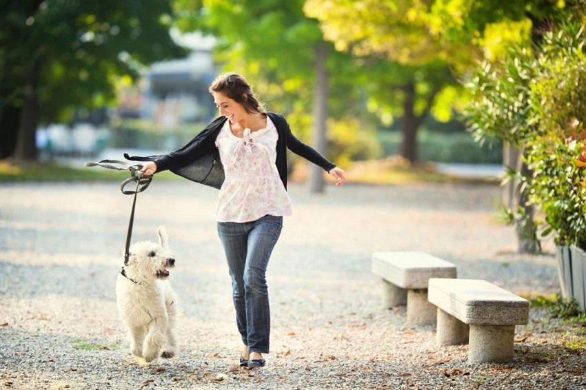 ý tưởng mở dịch vụ dắt thú cưng đi dạo